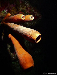 Even the different types of sponge have lots of color. I ... by Steven Anderson 
